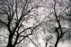 Vasi sanguigni del ` s del cielo Fotografie Stock Libere da Diritti