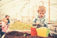 Vasi verdi e gialli di riempimento dell'arancia del bambino occupato, con suolo Ragazzo biondo sveglio che gioca nella serra ment fotografia stock libera da diritti