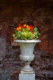 Vaso Fotos de Stock Royalty Free