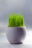 Vaso bianco con erba Immagini Stock