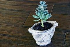 Vaso bianco con la pianta verde Immagine Stock