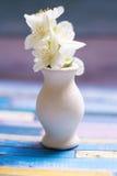 Vaso branco pequeno com o jasmim nele em um backgroung brilhante Imagens de Stock