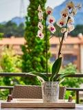 Vaso casalingo con il messaggio di amore e fiori sopra una traccia di legno fotografie stock libere da diritti