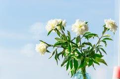 Vaso com flores na frente de uma janela imagens de stock royalty free
