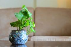 Vaso com folhas verdes Imagem de Stock Royalty Free