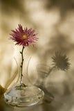 Vaso com uma flor Fotos de Stock Royalty Free