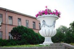 Vaso con i fiori Immagine Stock