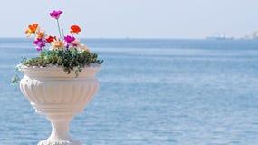 Vaso con i fiori Fotografia Stock