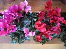 Vaso con i fiori di seta rossi immagini stock