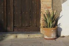 Vaso con il fiore dell'aloe sui precedenti della parete Fotografia Stock Libera da Diritti