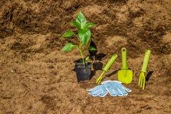 Vaso con il fondo bl dei guanti dell'attrezzatura degli strumenti di giardino delle piantine Fotografie Stock