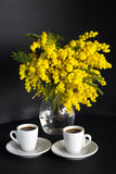 Vaso con la mimosa e due tazze di caffè su un fondo nero Immagini Stock