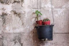 Vaso d'attaccatura con il piccolo cactus Fotografia Stock