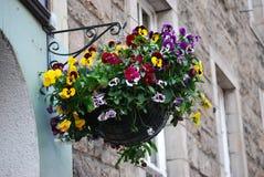 Vaso d'attaccatura delle viole del pensiero a Edimburgo, Scozia immagine stock