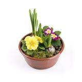 Vaso da fiori con i fiori della molla isolati su bianco Fotografia Stock Libera da Diritti