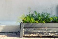 Vaso da fiori contro la parete bianca Fotografia Stock Libera da Diritti