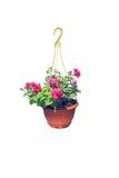 Vaso da fiori d'attaccatura con i fiori rosa della petunia Fotografie Stock Libere da Diritti