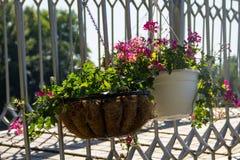 Vaso da fiori d'attaccatura con i fiori rosa del geranio Immagini Stock Libere da Diritti