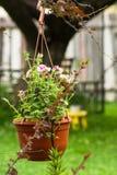Vaso da fiori d'attaccatura con le petunie rosa luminose Immagini Stock Libere da Diritti