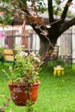 Vaso da fiori d'attaccatura con le petunie rosa luminose Immagini Stock