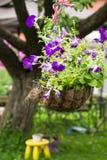 Vaso da fiori d'attaccatura con le petunie viola luminose Fotografie Stock Libere da Diritti