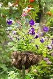 Vaso da fiori d'attaccatura con le petunie viola luminose Fotografia Stock Libera da Diritti