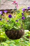 Vaso da fiori d'attaccatura con le petunie viola luminose Immagine Stock
