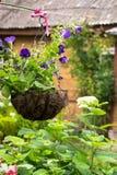 Vaso da fiori d'attaccatura con le petunie viola luminose Fotografia Stock