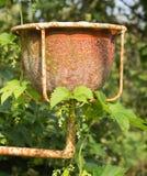 Vaso da fiori del giardino dell'argilla Fotografia Stock