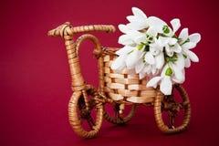 Vaso da fiori della bicicletta con i fiori della molla Fotografia Stock Libera da Diritti