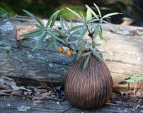 vaso da floresta com um ramo do espinheiro cerval de mar imagens de stock royalty free