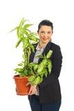 Vaso da terra arrendada da mulher de negócio com planta Fotografia de Stock Royalty Free
