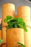 Vaso de bambu Imagens de Stock Royalty Free