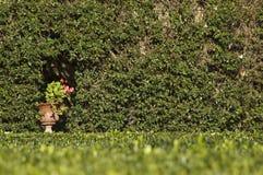 Vaso de flores ao lado do caramanchão coberto com a vegetação fotografia de stock royalty free