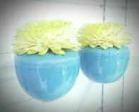 Vaso de flores bonito imagens de stock