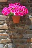 Vaso de flores com petúnias de florescência em uma parede de tijolo velha Fotos de Stock