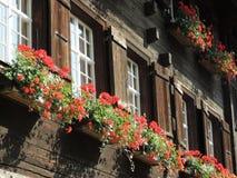 Vaso de flores da janela de cabana rústica de madeira fotografia de stock