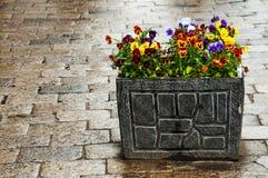 Vaso de flores de pedra brilhante no seixo Foto de Stock Royalty Free