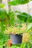 Vaso de flores de suspensão Fotos de Stock Royalty Free