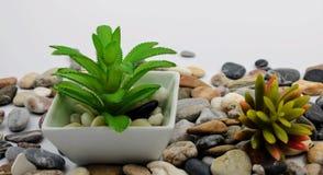 Vaso de flores pequeno com planta imagem de stock