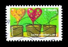 Vaso de flores, serie das plantas (flora), cerca de 2011 Imagem de Stock Royalty Free