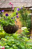 Vaso de flores de suspensão com os petúnias violetas brilhantes Foto de Stock