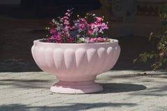 Vaso de pedra cor-de-rosa em que as flores crescem Fotos de Stock