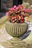 Vaso de pedra velho com flores cor-de-rosa Fotos de Stock Royalty Free