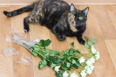 Vaso de vidro deixado cair e quebrado do gato doméstico das flores foto de stock