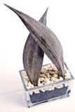 Vaso decorativo   Fotografie Stock Libere da Diritti