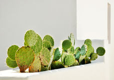 Vaso dei cactus Immagine Stock Libera da Diritti