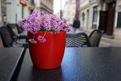 Vaso dei fiori in un caffè della città Fotografia Stock Libera da Diritti