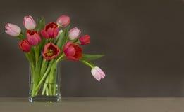 Vaso dei tulipani rossi e dentellare - backgroun di colore marrone scuro Fotografia Stock