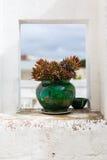 Vaso del cactus Fotografie Stock Libere da Diritti